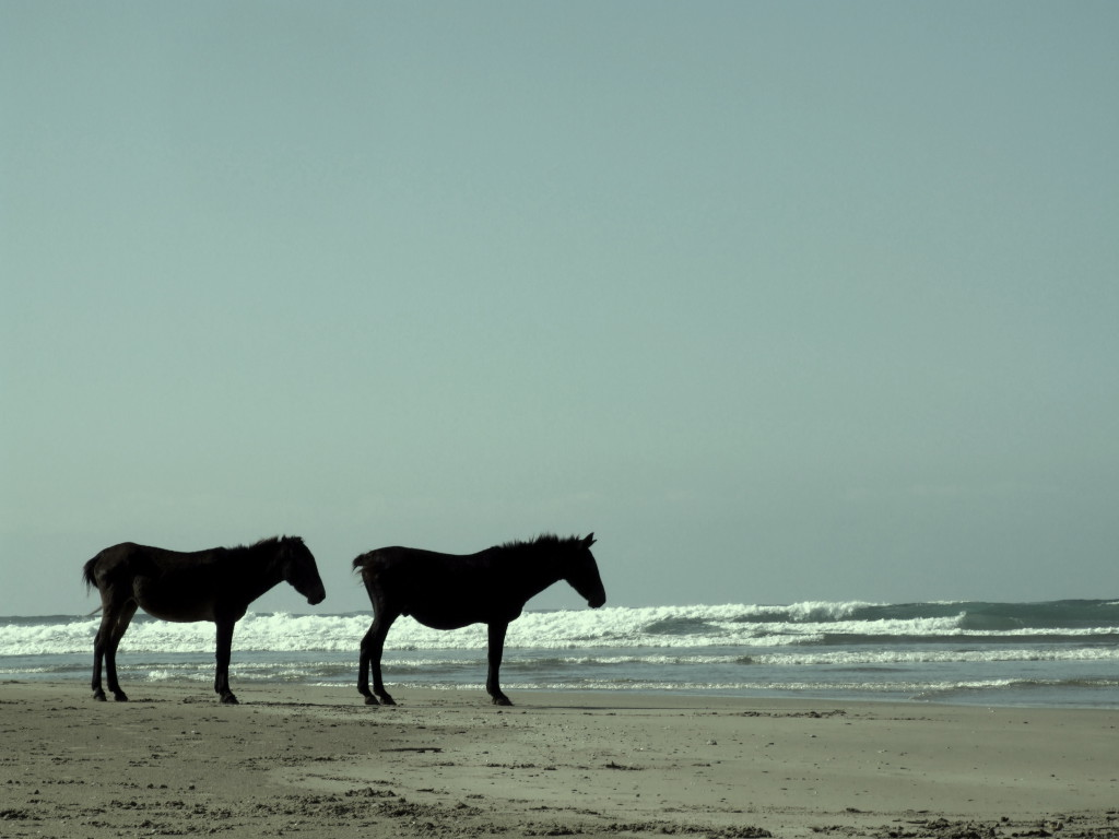 Donkeys on the Transkei beach
