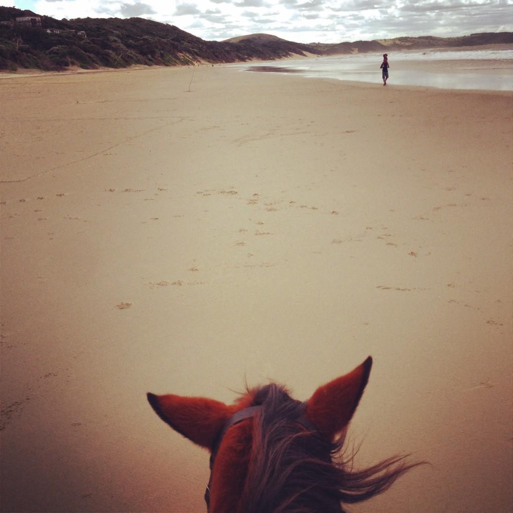 Cintsa Horses