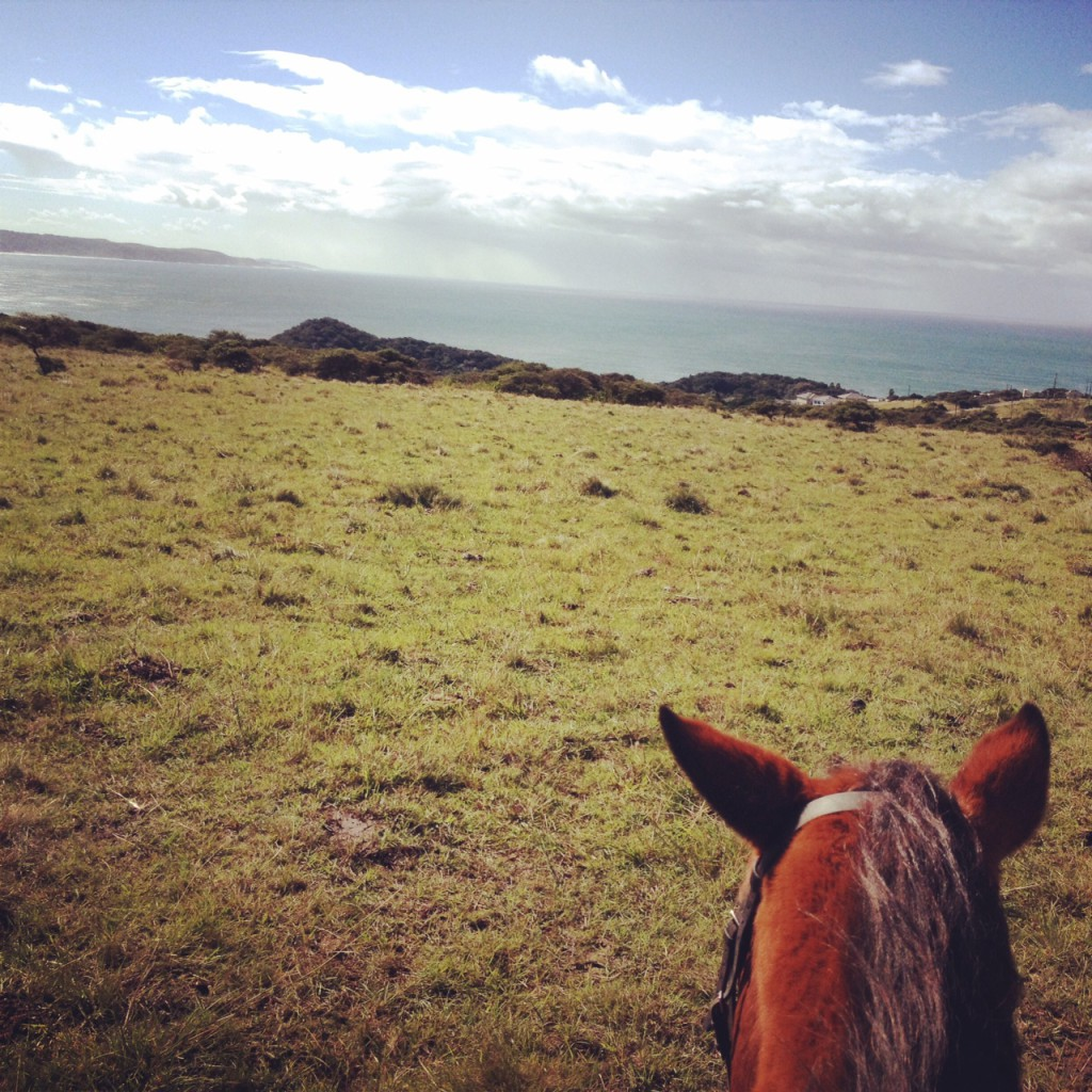 Cintsa Horses 2