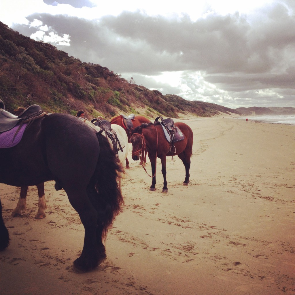 Cintsa Horses3