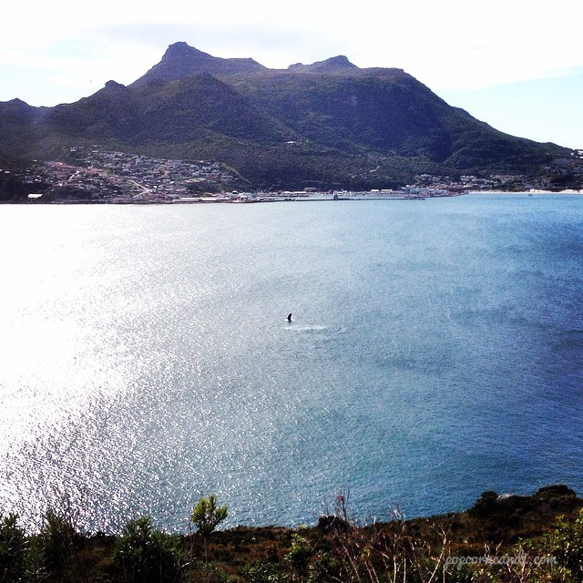 Whale Watching Chapmans Peak Hout Bay