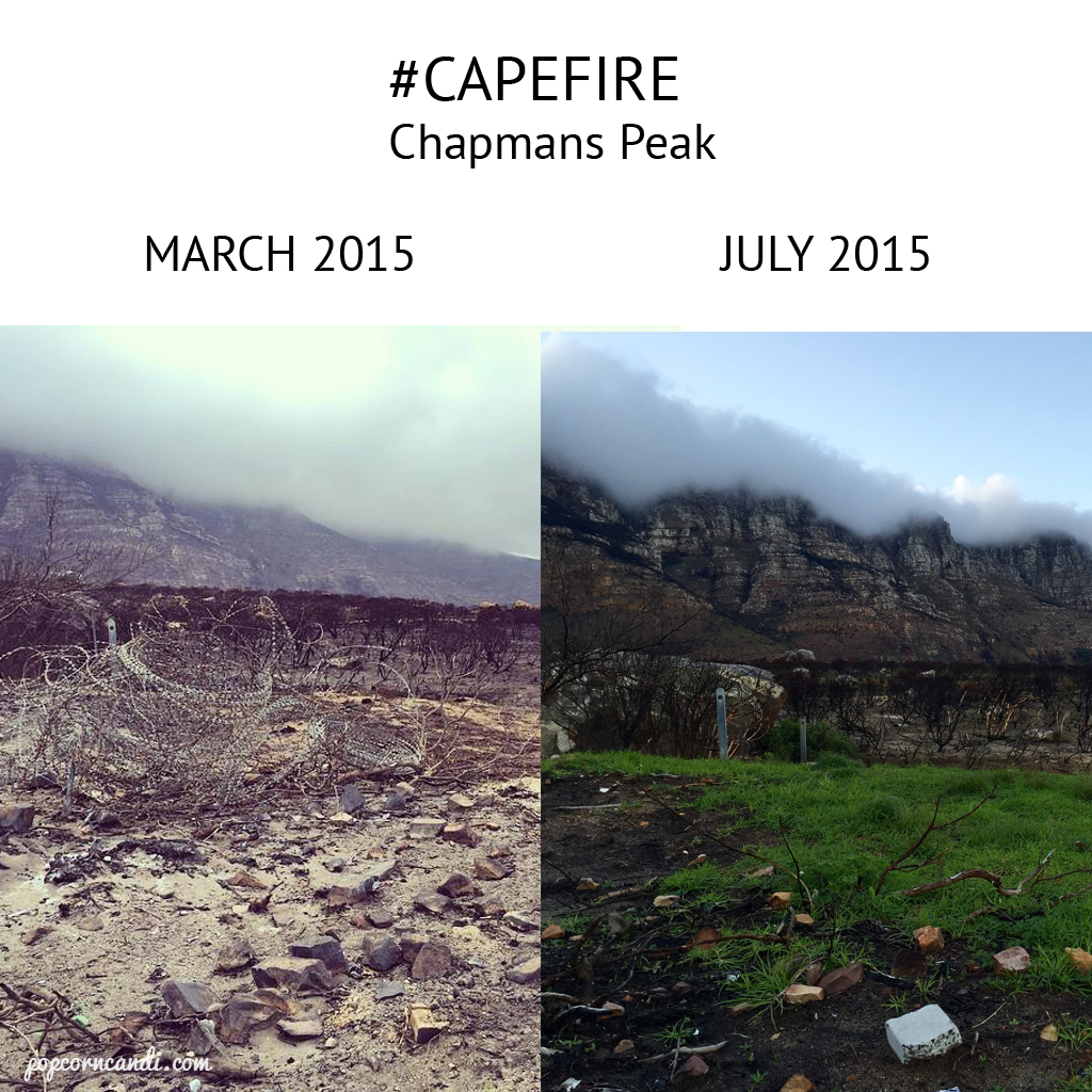 Chapmans Peak Before After Cape Fire